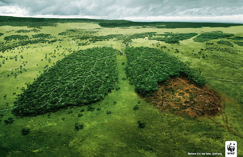 contenido visual para marketing social : WWF