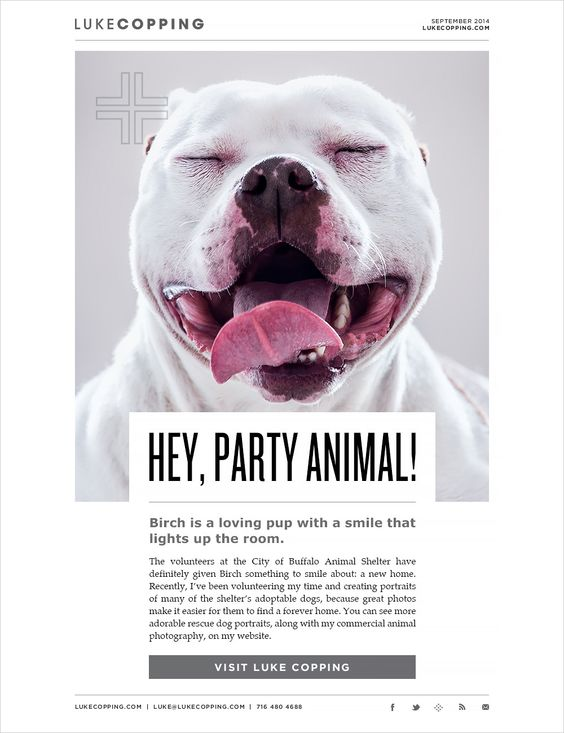 campañas de email con animales