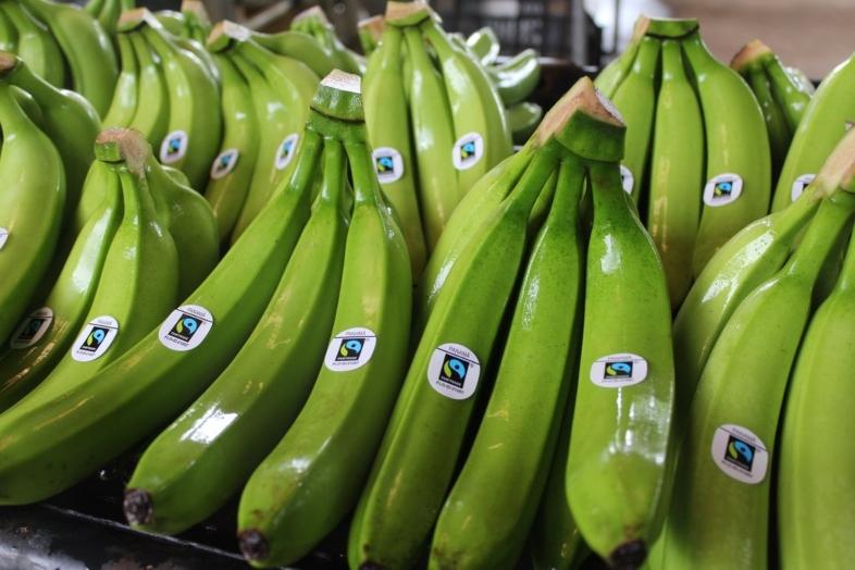 Bananas de países de America del Sur: uno de los productos de comercio justo más demandados